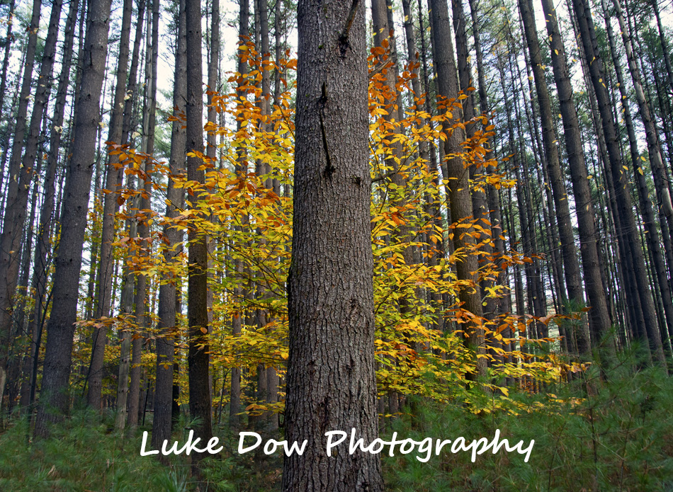 Lake George Fall and Winter Gallery has been updated!!!